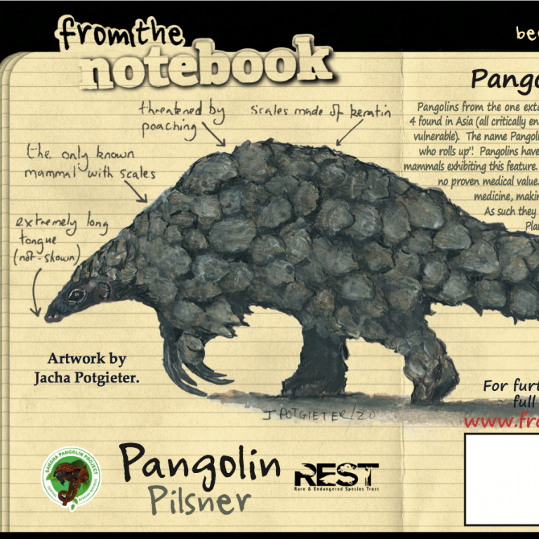 An example of what the Pangolin Pilsner label looks like